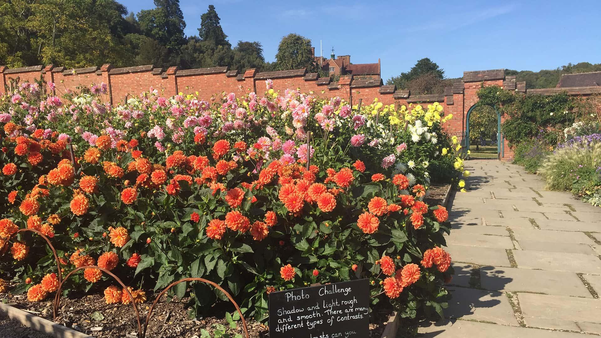 Beautiful flower beds near Chartwell